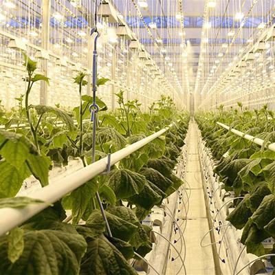 Бизнес по выращиванию огурцов в теплице круглый год (рентабельность, окупаемость)
